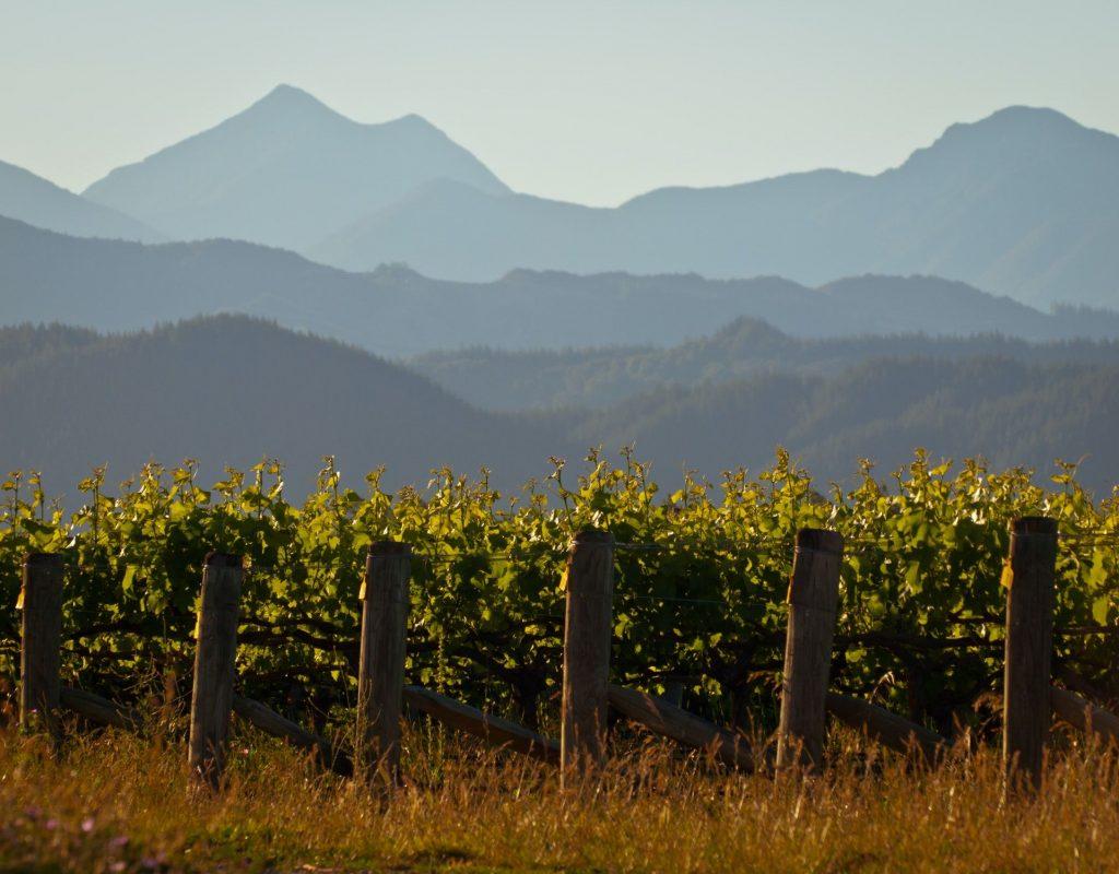 Vinyard mountain backdrop
